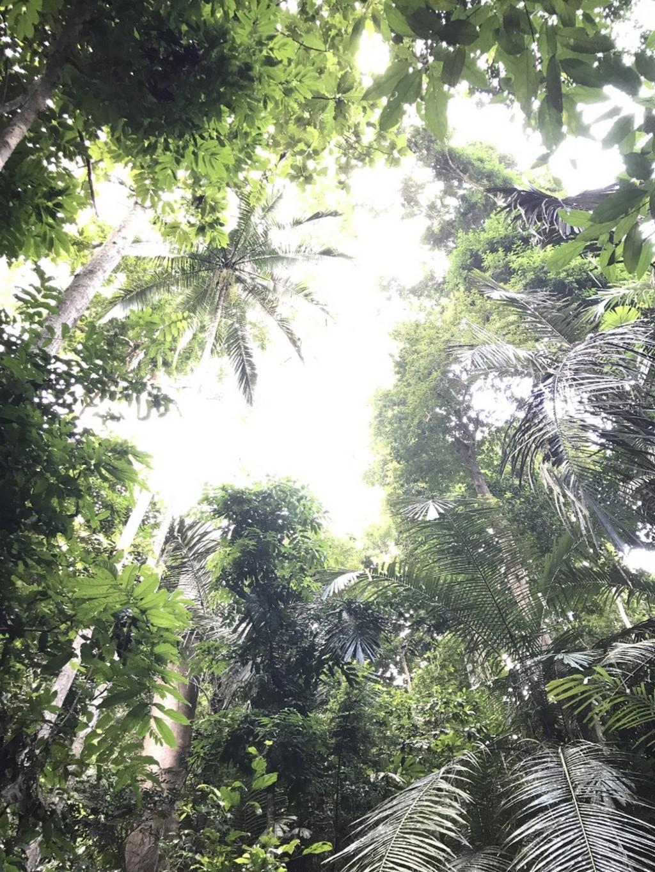 キャノピーウォーク(Mutiara Taman Negara)